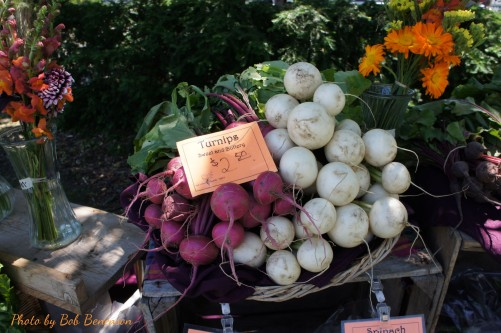 Turnips at Michigan State University's Student Organic Farm stand