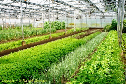 Hothouse growing at Stone Barns Center