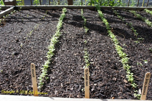 Plant rows at Chicago's Uncommon Ground