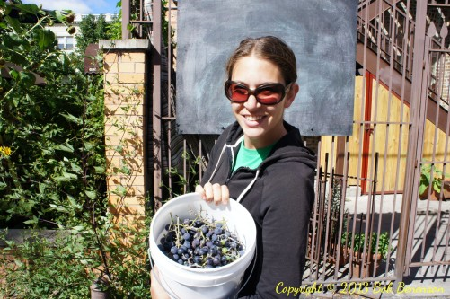 Jen Rosenthal, the rooftop farmer at Chicago's Uncommon Ground