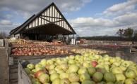 Apples await pressing at Virtue Cider's ciderhouse in Fennville, Michigan.