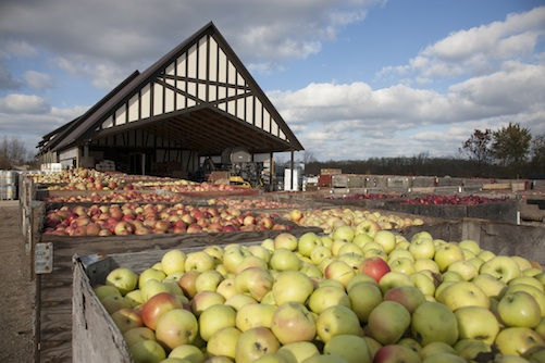 Apples await pressing at Virtue Cider's ciderhouse in Fennville, Michigan.