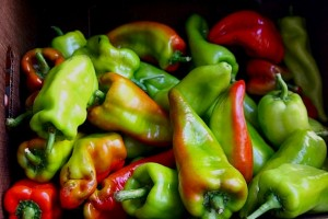 Beaver Dam heirloom peppers