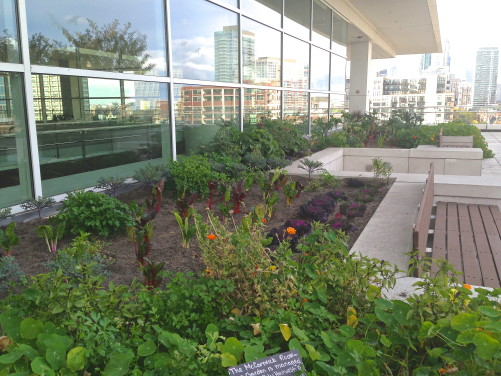 Rooftop garden at McCormick Place