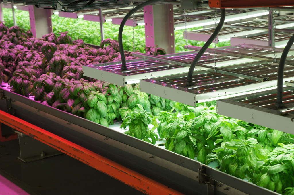 FarmedHere indoor vertical farm