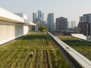 This expansive urban rooftop farm sits atop Chicago's McCormick Place, the nation's largest convention center. The site's catering service has also greatly boosted its sourcing of food from local producers. Photo by Wittefini, courtesy of Farm Aid.