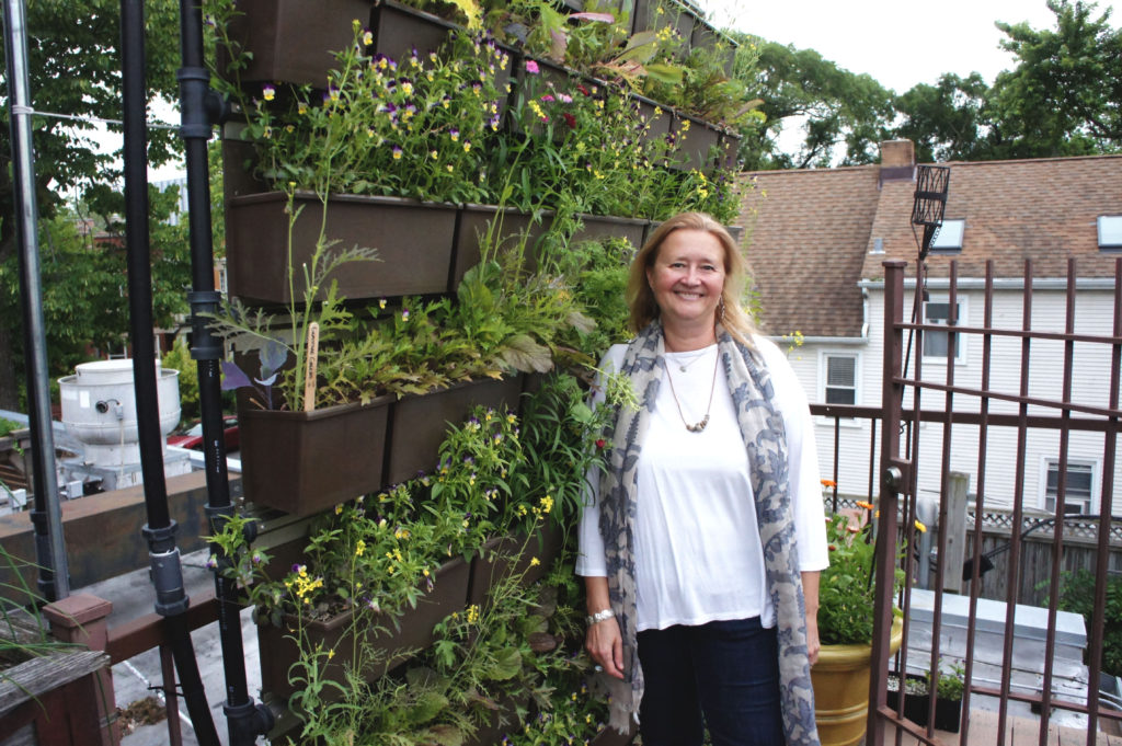 Uncommon Ground has not stopped innovating after 25 years of farm to table leadership. Here owner Helen Cameron stands in front of a recently installed growing wall on her restaurant's rooftop farm. Photo: Bob Benenson/FamilyFarmed