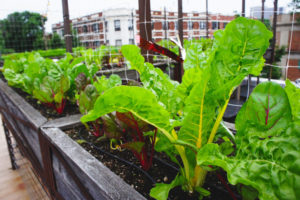 Uncommon-Ground-rooftop-2-061616