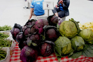Those cabbages would make a lot of cole slaw or sauerkraut. Photo by Bob Benenson/FamilyFarmed.