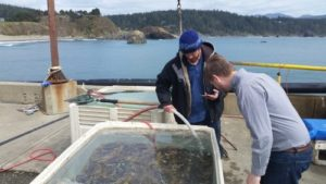 Dungeness crab is among southwestern Oregon's seafood riches. Landing more of the market value is how the Southwestern Oregon Food Systems Collaborative aims to shift the local industry outlook. Photo: NeighborWorks Umpqua