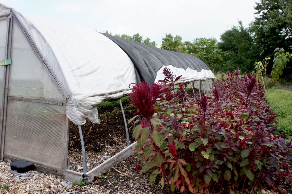 Growing Power and its founder Will Allen have pioneering urban farming techniques such as the hoop house on the left, and also focus on vertical-growing or trellised plants that save space in their small urban farms.